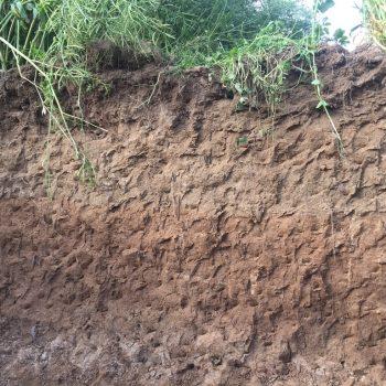 Profil de sol à tendance limoneuse